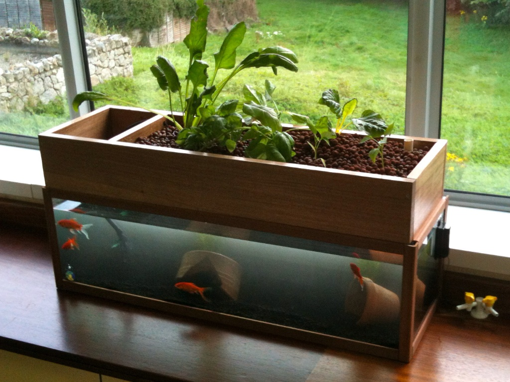 Palm springs aquaponics custom systems for Fish tank hydroponic system